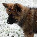 Lhassa neige 08
