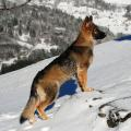 Lhassa neige 1401 m