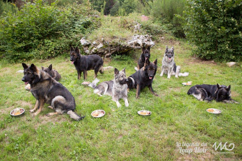BARF - Alimentation naturelle | Altdeutsche Schaferhunde