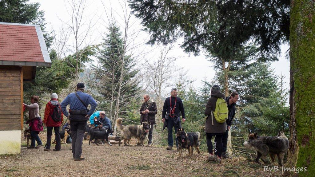Site de rencontre pour chien belgique
