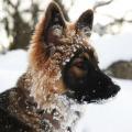neige 17 01 16 a