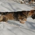 neige 17 01 16 f