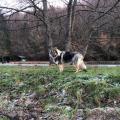 Volko